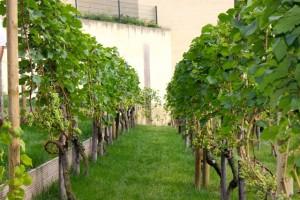 Wijngaarddoorkijkje